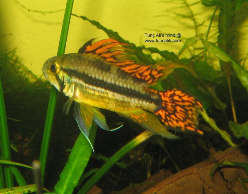 My aquariums at home (July 2009) ? tuncalik.com - Natural Aquariums ...