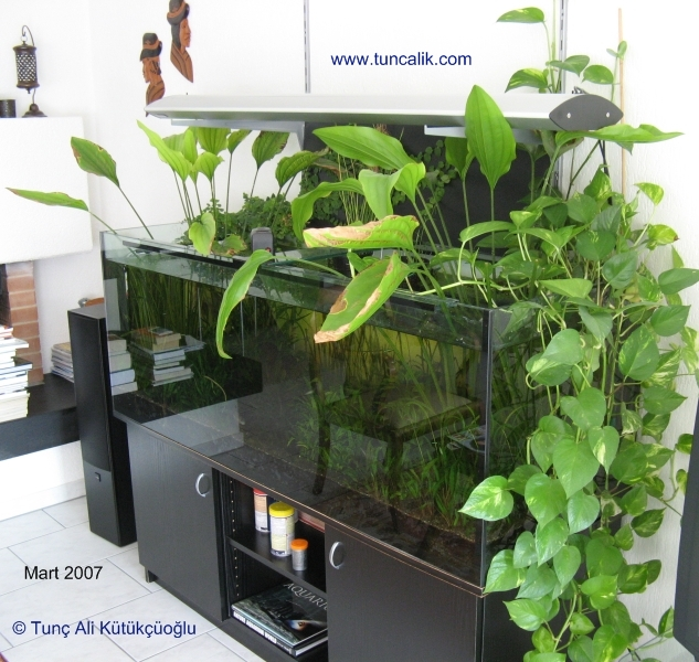 Indoor Plants Grown In Water: Indoor Plants For Water Purification And Nitrate Reduction