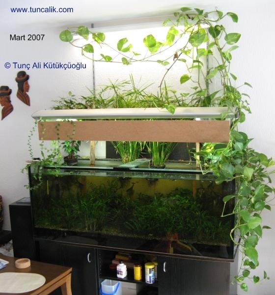 Decor Aquarium Low Tech