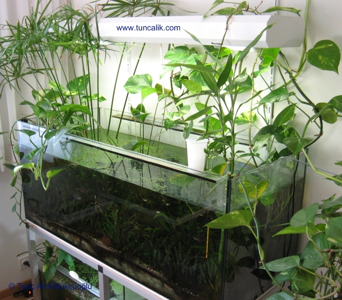 Indoor Plants Grown In Water: Gardening Forums