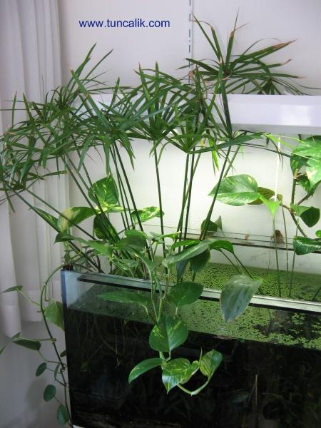 Best Aquarium House PlantsAquariumHome Plans Picture Database
