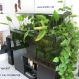 A 160x60x60cm community aquarium with indoor plants.