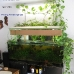 A 160x60x60cm community aquarium with indoor plants for water purification.