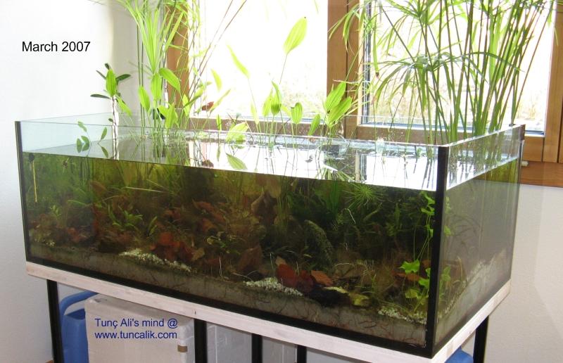 My Aquariums At Home July 2009 Tuncalik Com Natural
