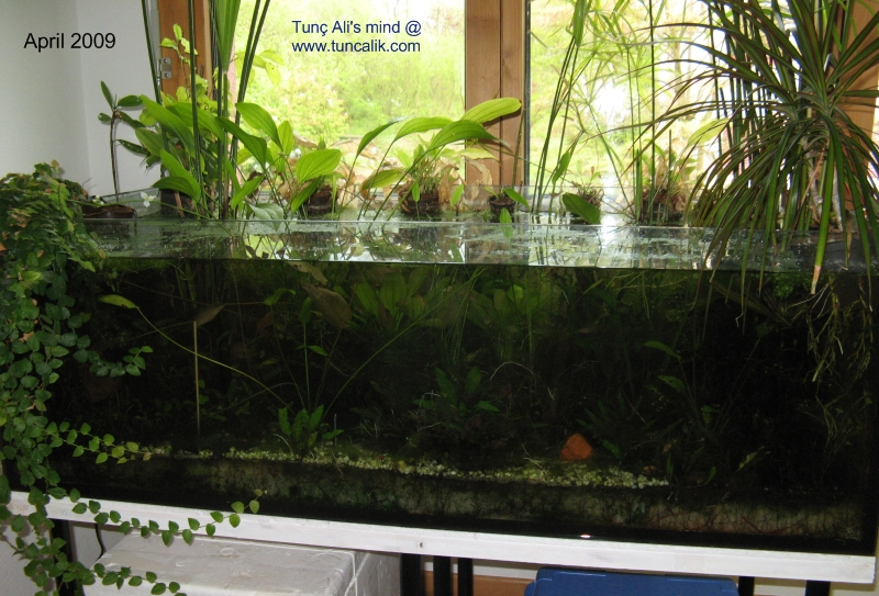 Natural Fish Tank At Home