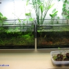 Two low-tech aquariums on my working table