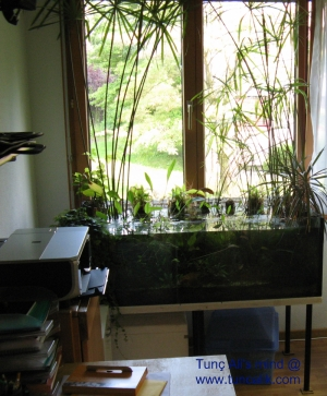Biotope in my room; a low-tech natural aquarium