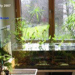 Bitope in my study. A low-tech natural aquarium