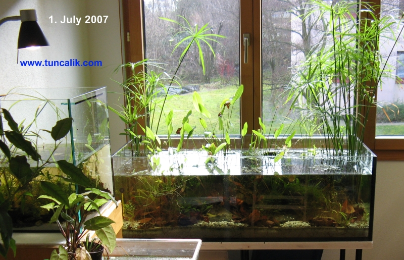 Biotope in my study a low tech natural aquarium for Self sustaining garden with fish