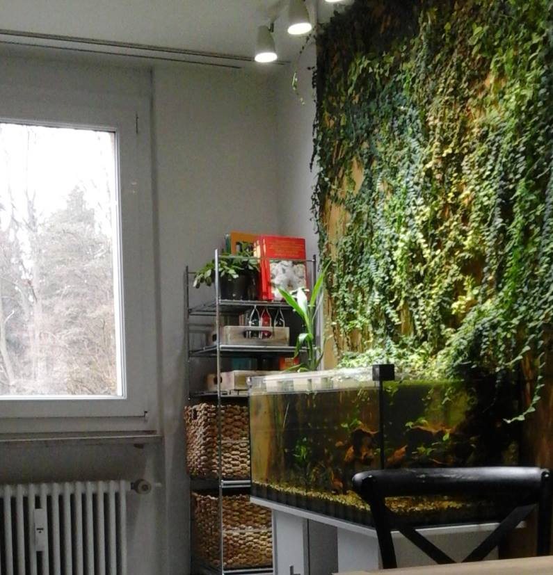 A semi-natural aquarium in our kitchen (100x40x40cm) without heater and filter.